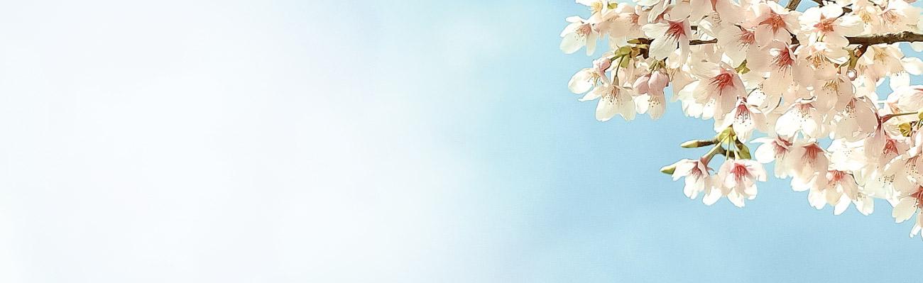 huvudbild_spring-flower