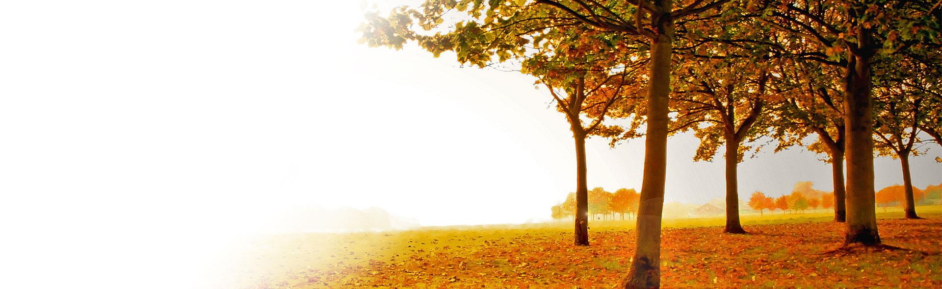 autumn_web